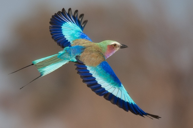 Colorful hummingbirds flying - photo#51