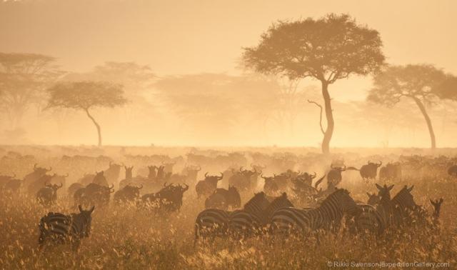 120208_E.Africa_0456