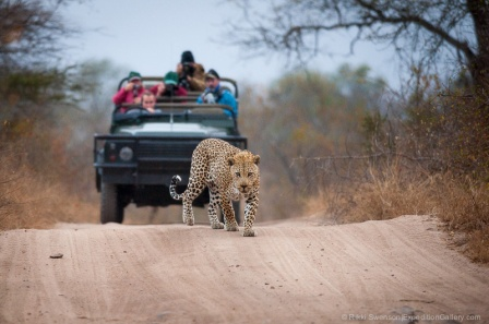 The reward of tracking leopards in the early morning.