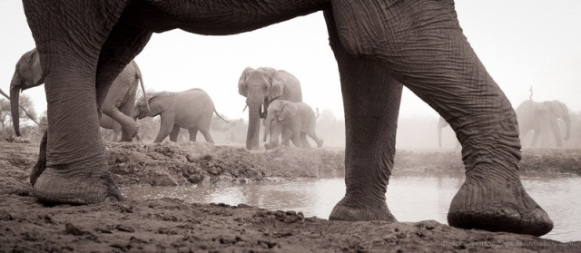 A fitting frame for an elephant herd, viewed from the underground hide at Mashatu.