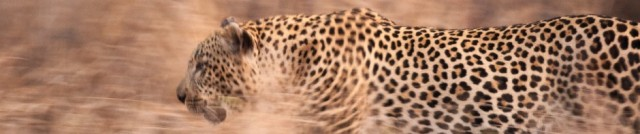 cropped-120829_botswana_9706.jpg