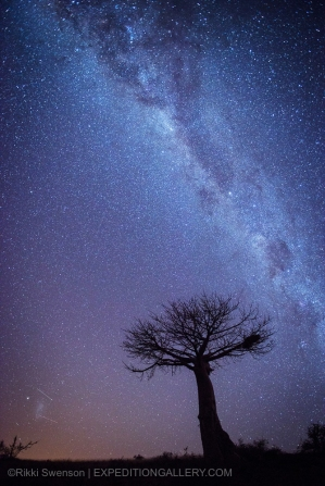 Night sky Milky Way above a favorite baobab tree.